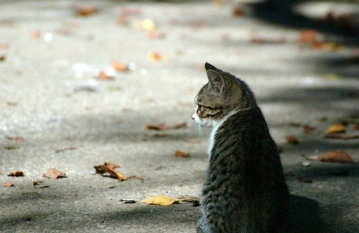 Домик для уличных харьковских кошек пришлось перенести