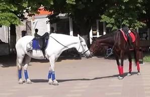 Харьковчанам мешают лошади, гуляющие по городу
