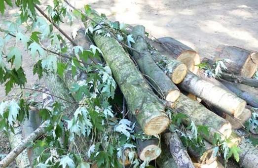 Возле харьковского аграрного вуза незаконно рубили дубы и клены