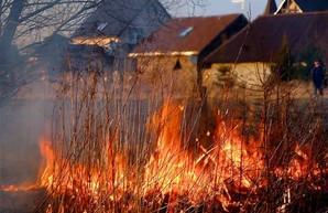 Жителю Харьковщины сосед случайно сжег пасеку