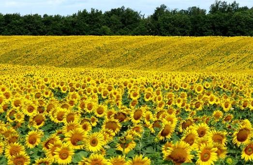 Фермер присвоил сельхозземли на Харьковщине: дело дошло до суда