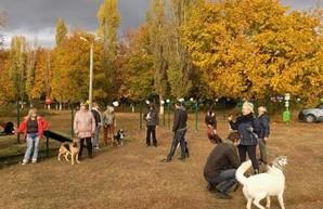 В Харькове стало больше места для выгула собак