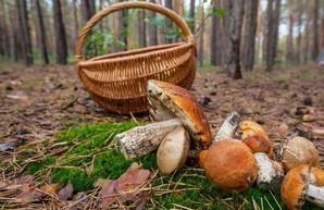 Под Харьковом люди ушли в лес за грибами и не вернулись
