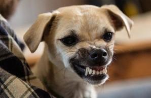 Под Харьковом ребенок покатался на собаке и попал в больницу