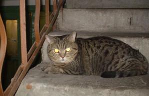 «Била ногой». Харьковчанин заступился за кошку и получил судебный приговор