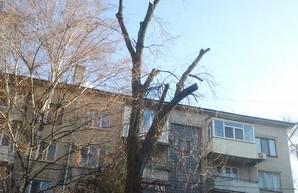 В Харькове продолжается варварское кронирование деревьев (ФОТО)