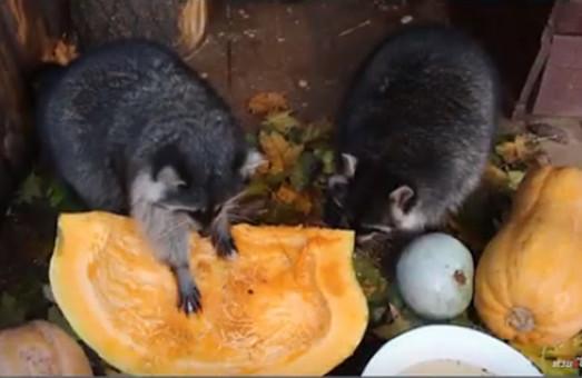 Животные в Харьковском зоопарке готовятся встречать зиму (ВИДЕО)