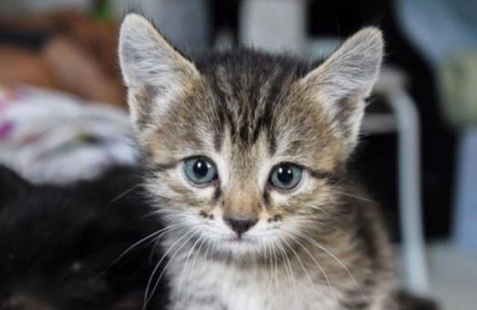 Харьковчане смогут помочь спасенным бездомным котятам