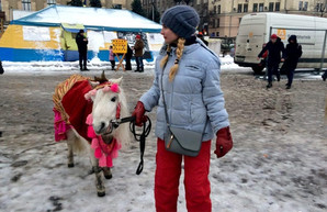 Харьковчане жалуются Кернесу на лошадей в центре города
