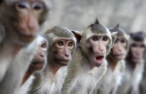 Реконструкция зоопарка: стало известно, сколько потратили на «Планету обезьян»