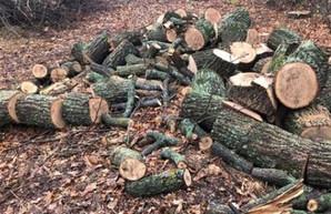 Вырубка леса: в лесничества Харьковщины нагрянут проверки с Кабмина
