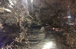 ЧП в Харькове: огромный клен рухнул на машину с пассажиркой (ФОТО)