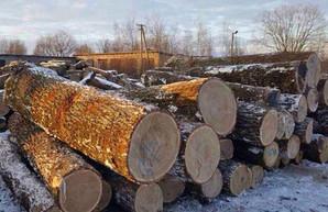 Вырубка дубов на 17 миллионов: четырем лесничим Харьковщины объявили о подозрении