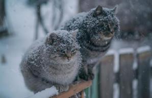 На выходных харьковчанам обещают снег