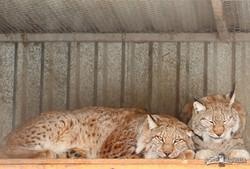 День святого Валентина в Харьковском зоопарке (ФОТО, ВИДЕО)