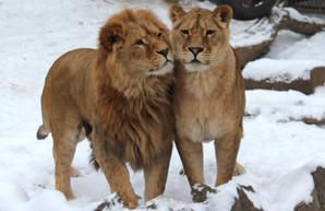 День святого Валентина в Харьковском зоопарке