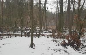 В Гутянском лесхозе выявили многомиллионные нарушения – экоинспекция