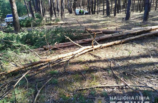 На Харьковщине «черные лесорубы» не прекращают орудовать даже во время карантина (ФОТО)