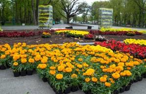 В саду Шевченко и на Мемориале Славы высаживают цветы