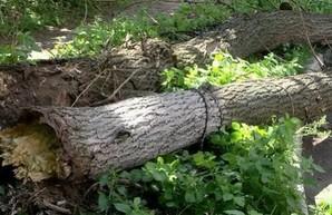 Разгул стихии в Харькове: упало около двух десятков деревьев