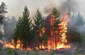 В случае лесных пожаров на Харьковщине спасателям будут помогать волонтеры