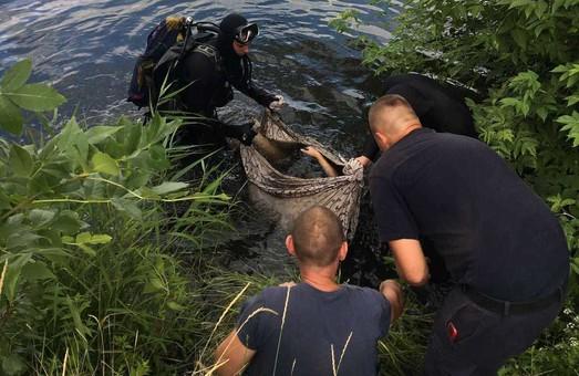 В Харькове утонул подросток, упавший с дамбы (ФОТО)