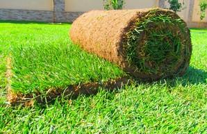 В главном харьковском парке решили не экономить на траве