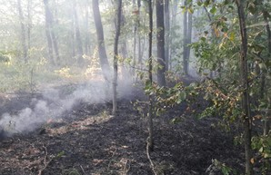 Под Харьковом снова горел хвойный лес