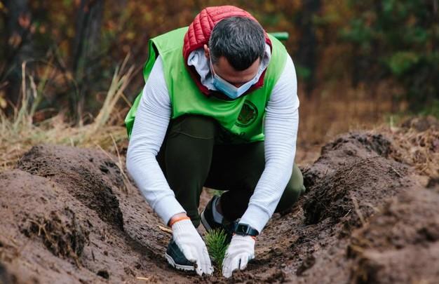 На Харьковщине за день высадили 40 тысяч деревьев - ХОГА