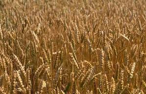 Аграрии Харьковщины отмечают день работника сельского хозяйства с высокими показателями