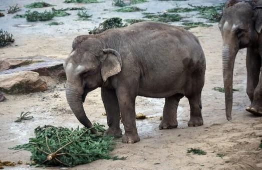 Киевский зоопарк призвал посетителей не кормить животных елками