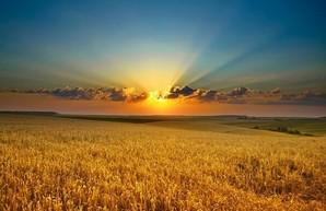 Рынок земли: В какую сумму оценят украинскую землю?