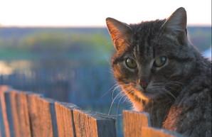 В Херсоне коты стали частью экосистемы