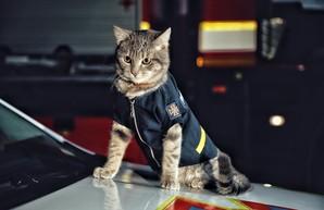 Киевский кот получил звание майора ГСЧС
