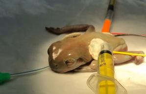 В Днепре успешно провели операцию и спасли жизнь онкобольной жабе