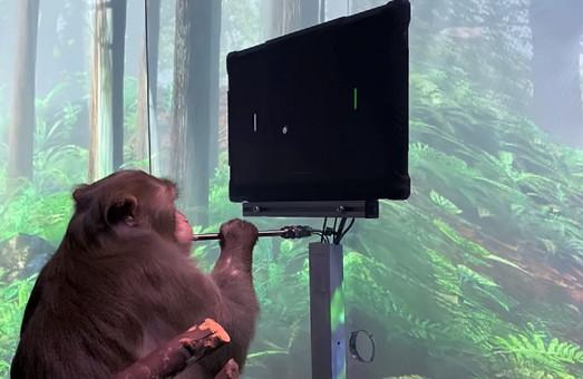 Маск научил обезьяну играть в компьютерные игры силой мысли с чипом Neuralink