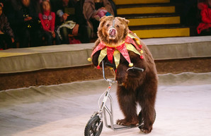 Все цирки в Украине вскоре могут лишиться животных