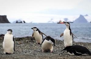 National Geographic признал существование пятого океана