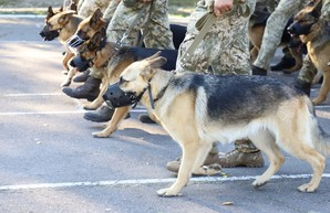 Впервые на параде ко Дню Независимости примут участие собаки пограничников