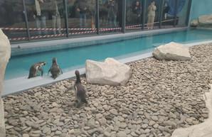 На Харьковской таможне растаможили пингвинов